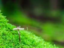 Симпатичное королевство гриба Стоковые Изображения