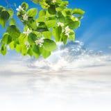 Симпатичное цветя дерево Стоковые Изображения