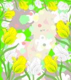 Симпатичные белые и желтые тюльпаны в цветени Стоковая Фотография