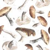 Симпатичные грибы 1 autunm Стоковые Изображения RF