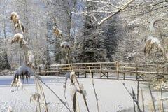 Симпатичные детали ветвей с снегом, заморозком и деревянным мостом Стоковая Фотография RF