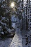 Симпатичные детали ветвей с снегом, заморозком и деревянным мостом Стоковое Фото