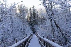 Симпатичные детали ветвей с снегом, заморозком и деревянным мостом Стоковые Фото