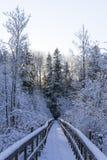 Симпатичные детали ветвей с снегом, заморозком и деревянным мостом Стоковое Изображение