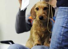 Симпатичные животные на выставке собак стоковые фотографии rf