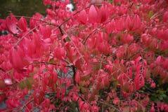 Симпатичные листья пинка в осени Стоковая Фотография