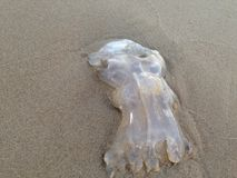 Симпатичные медузы стоковые фото