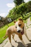 Симпатичные счастливые собаки Стоковое Изображение