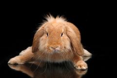 Симпатичные танцы кролика стоковые изображения