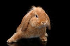 Симпатичные танцы кролика стоковое фото rf