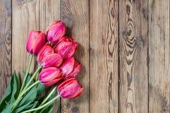 Симпатичные цветки тюльпана Стоковое Изображение RF