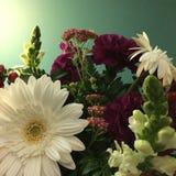 Симпатичные цветки стоковое изображение rf