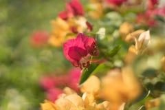 Симпатичные цветки Стоковые Изображения