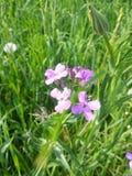 Симпатичные цветки Стоковая Фотография RF