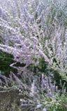 Симпатичные цветки Стоковые Фото
