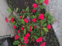 Симпатичные цветки Стоковое Изображение