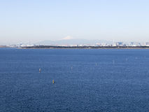 Симпатичный большой залив токио Стоковая Фотография RF