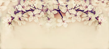 Симпатичный вишневый цвет, знамя весеннего времени флористическое Стоковая Фотография RF
