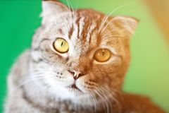 Симпатичный кот смотря вверх сидящ на деревянной предпосылке Стоковая Фотография