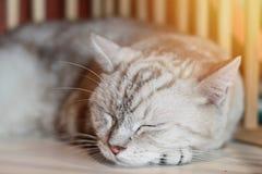 Симпатичный кот спать в комнате, мягкий фокус Стоковое фото RF