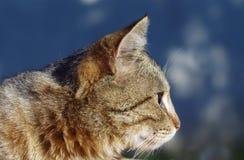Симпатичный кот tabby Стоковые Фото