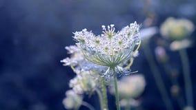 Симпатичный очаровывать шикарное и волшебно красивое цветорасположение видеоматериал
