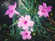 Симпатичный пинк цветков Стоковое Изображение