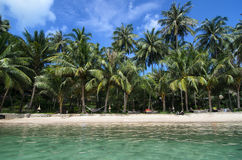 Симпатичный пляж с водой бирюзы и зелеными пальмами на Trop Стоковое фото RF