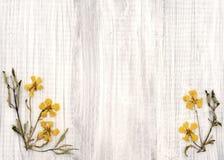 Симпатичный утес Роза высушил желтые цветки на затрапезной шикарной деревенской белой деревянной доске с комнатой или космосе для  Стоковые Фото