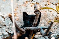 Симпатичный черный кот стоковые изображения