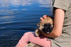 Симпатичный щенок сидя на руках Стоковое Изображение
