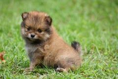 симпатичный щенок Стоковая Фотография RF