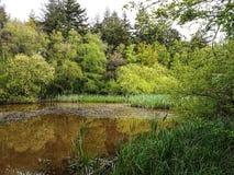 Симфонизм в зеленом цвете Стоковые Фото