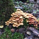 Симфонизм грибов Стоковые Фото