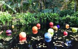Симфонизм цветов в бассейне Стоковые Фото