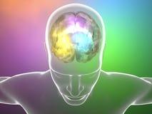 Синапс нейронов мозга, анатомия, головной профиль, Стоковое Изображение RF