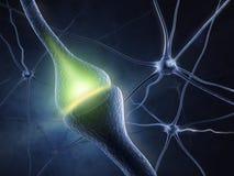 синапс Стоковое Фото