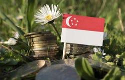 Сингапурский флаг с стогом денег чеканит с травой Стоковые Фото