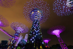 СИНГАПУР - 22-ОЕ НОЯБРЯ 2016: Supertrees на садах заливом Стоковое Фото