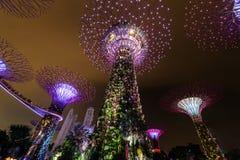 СИНГАПУР - 22-ОЕ НОЯБРЯ 2016: Supertrees на садах заливом Стоковое Изображение