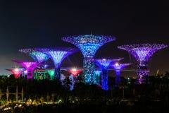 СИНГАПУР - 22-ОЕ НОЯБРЯ 2016: Supertrees на садах заливом Стоковая Фотография RF