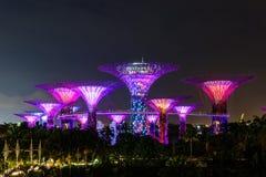 СИНГАПУР - 22-ОЕ НОЯБРЯ 2016: Supertrees на садах заливом Стоковые Фотографии RF