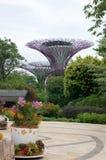 СИНГАПУР - 23-ье июля 2016: Взгляд дня рощи Supertree на садах заливом Spanning 101 гектар, и 5 Стоковое Фото
