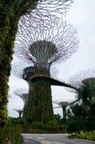 СИНГАПУР - 23-ье июля 2016: Взгляд дня рощи Supertree на садах заливом Spanning 101 гектар, и 5 Стоковые Изображения RF
