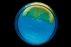 синее стекло martini стоковые изображения rf
