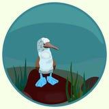 Сине-шагающее gannet в круге на камнях среди травы Стоковая Фотография