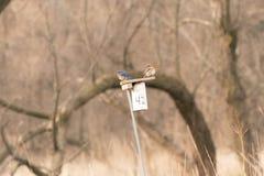 Синие птицы и ответ к всему Стоковые Изображения