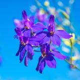 Синие цветки на ясном голубом небе Стоковое Фото