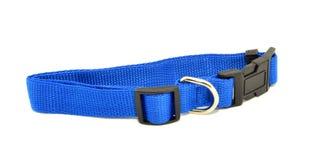 Синий воротничок собаки Стоковое фото RF
