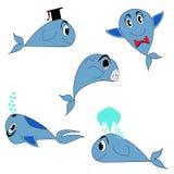 синий кит Стоковые Фотографии RF